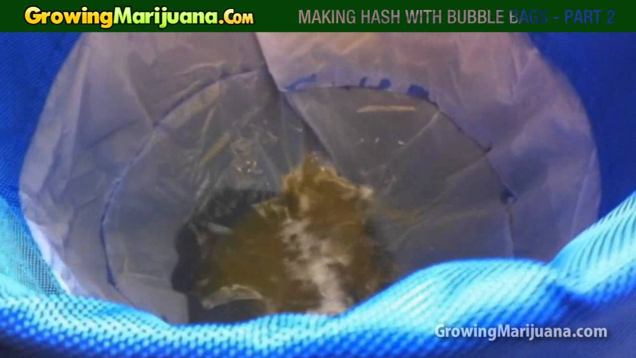 Making Hash With Bubble Bags Part 2 Of