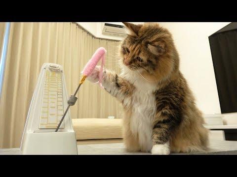 メトロノームに猫じゃらしくっ付けたら最強なんじゃね?