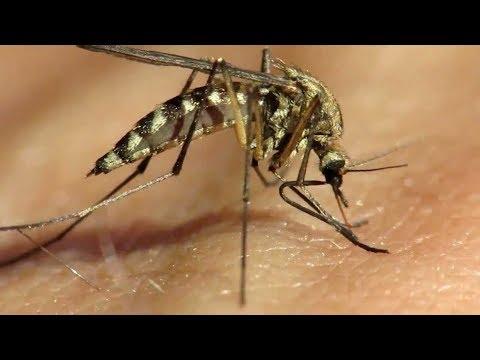 Опасные укусы комаров: что может случится?