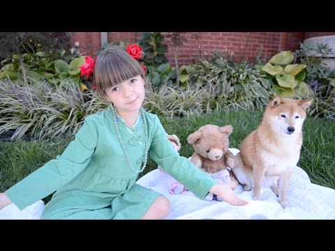 Tea Party with Shiba Inu and British Accent