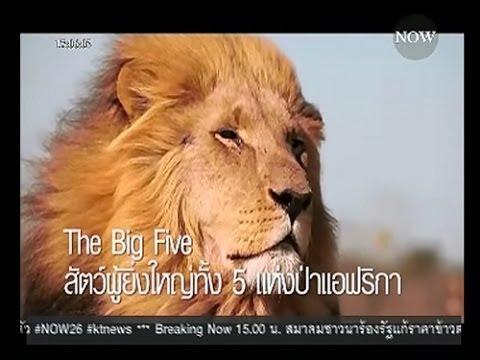 สัตว์ผู้ยิ่งใหญ่ทั้ง 5 แห่งป่าแอฟริกา