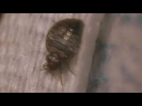 Where Do Bed Bugs Hide Pest Control Youtube