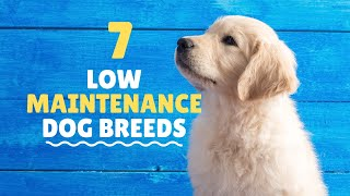 Low Maintenance Dogs For Busy Owners