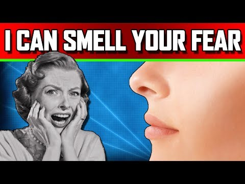 Can Humans Smell Fear? And Does it Get Weirder?