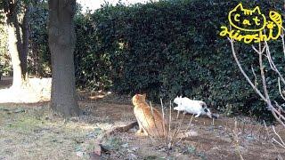 犬とも仲良しなひろし君。 木の上に何か見つけたのかハンティングモード...