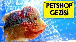 PetShop Gezisi - FlowerHorn, Betalar ve Lepistesler