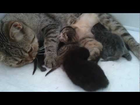 Котята только родились  2011