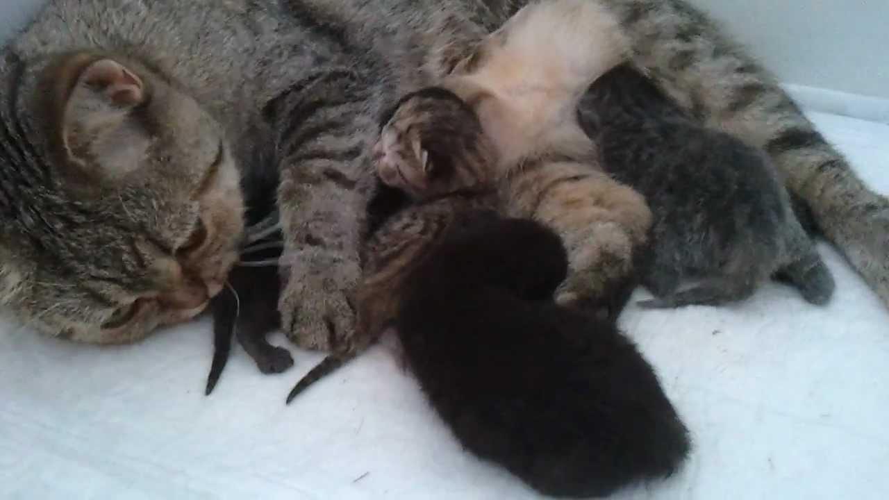 фото только рождённых котят #3