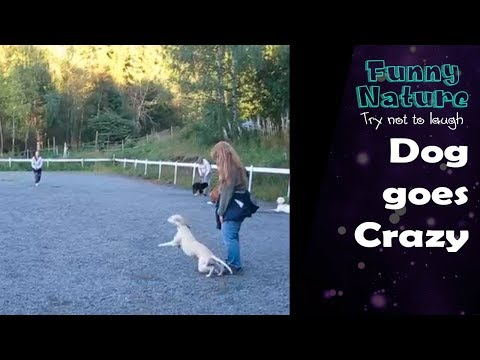 Woman leaves Dog from the leash then something goes crazy! 2017