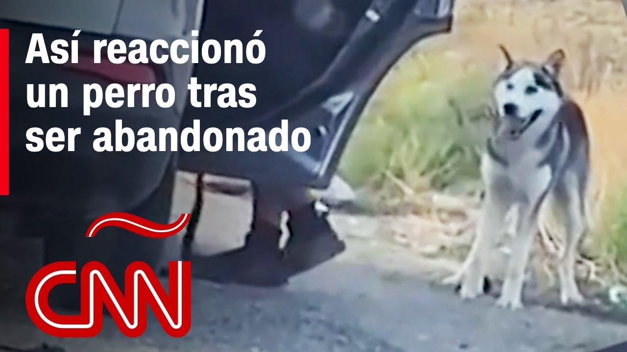 Husky abandonado en la carretera corre desesperado tras su dueño en desgarrador video