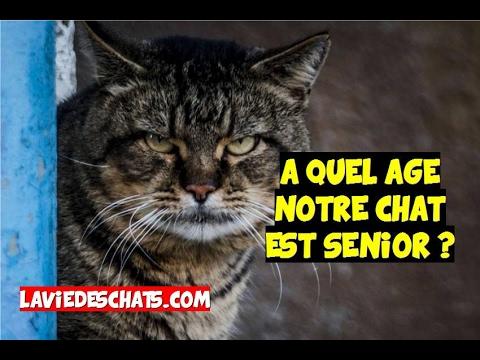 A Quel âge Un Chat 🐱 Devient Vieux Ou Senior ?
