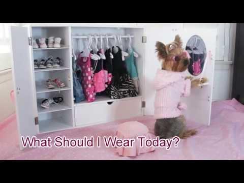 Genial Doggie Closet Funny Video Of Dog, Chloe Polka Dot Yorkie   YouTube