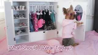 Doggie Closet Funny Video Of Dog, Chloe Polka Dot Yorkie