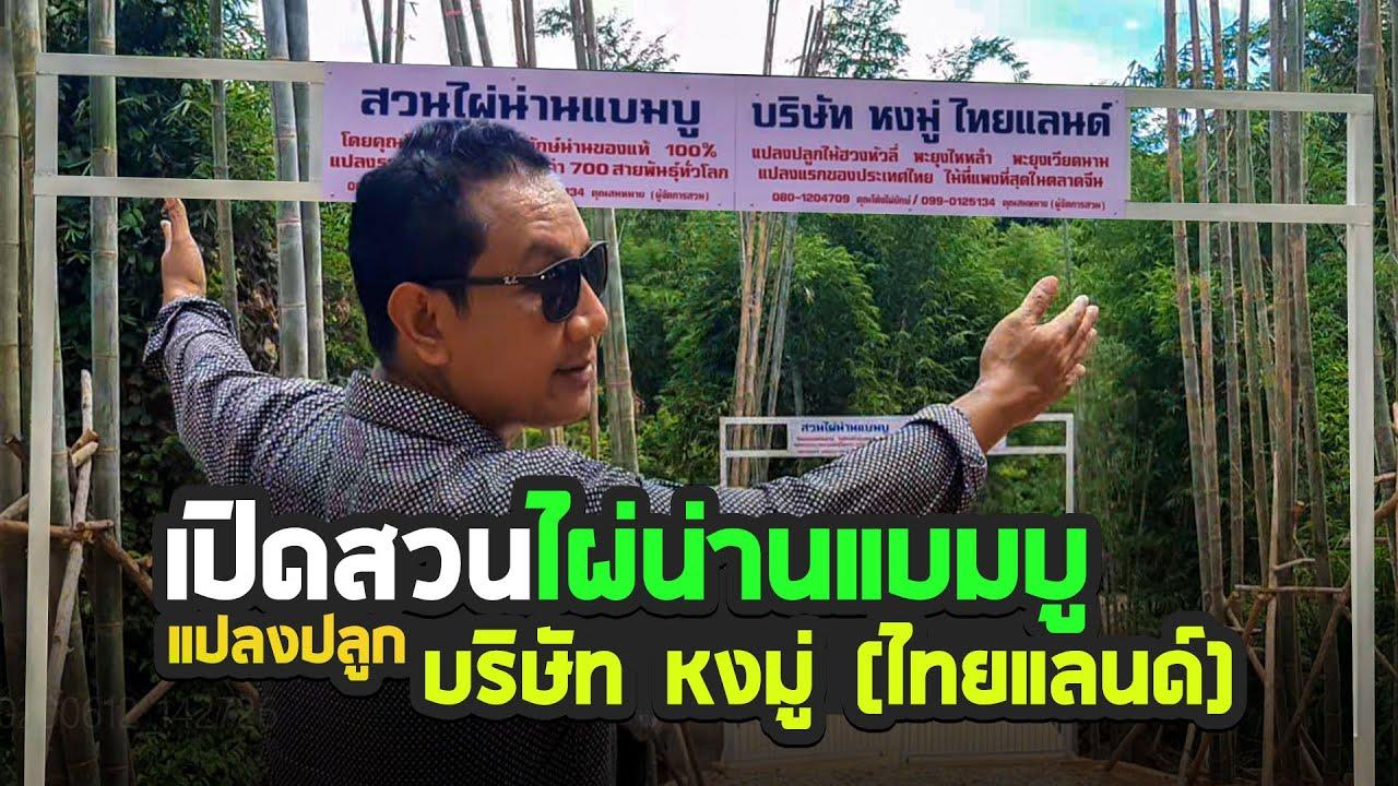 สวนไผ่น่านแบมบูสายพันธุ์ไผ่เยอะมากๆแปลงปลูกไม้ฮวงหัวลี่แปลงแรกในไทย 086-4072262 คุณนิ้ง