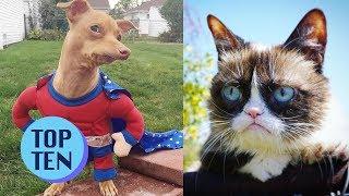 Top 10 Famous Internet Animals