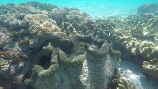 Michaelmas Cay Wildlife - Ocean Spirit Cruises
