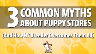 Puppies For Sale Westchester Ny - 3 Common Myths - Ny Breeder