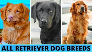 All Retriever Dog Breeds