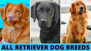 All Retriever Dog Breeds