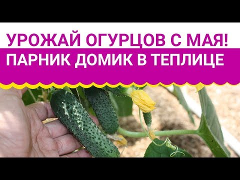 Самый ранний урожай огурцов! Парник-домик в теплице