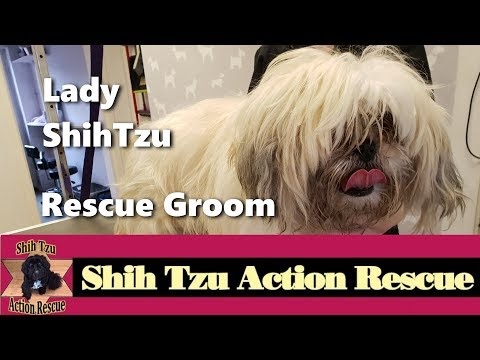 Lady Shihtzu Shihtzu Action Rescue Youtube
