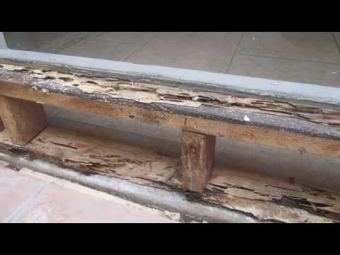 Drywood and Subterranean Termites in Southern California