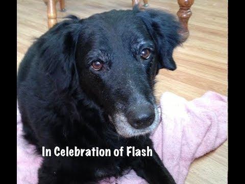 In Celebration of Flash