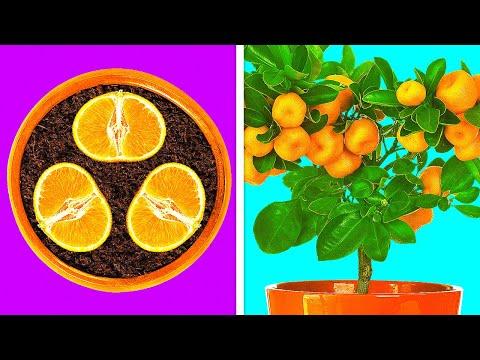เคล็ดลับในการปลูกพืชเองได้อย่างง่ายดาย 28 วิธี
