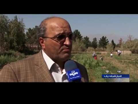 Iran Herbal Plants cultivation, Yazd province كاشت گياهان دارويي استان يزد ايران