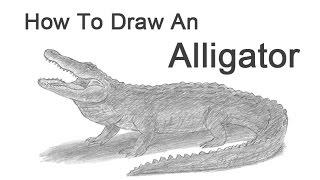 How to Draw an Alligator