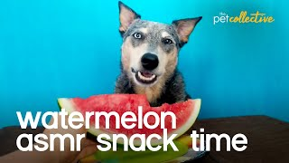 Watermelon Snack Time