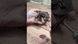 Design Animal Form Wood  How to make Toad Wood Carving  Top of Wood Art  Animal Wood Art Design Anim