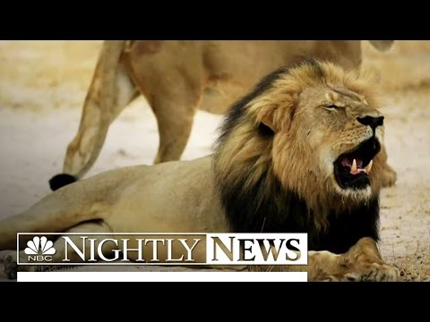 Where Is the Minnesota Dentist Who Killed Cecil the Lion? | NBC Nightly News