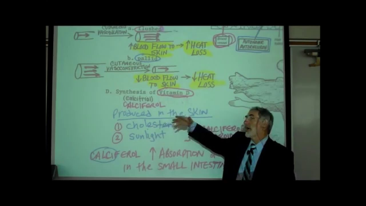 ANATOMY; THE INTEGUMENT; Part 1 by Professor Fink - YouTube