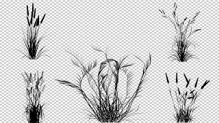 Bushes Of Plants Stock Motion Graphics