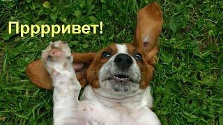 Смешные и забавные животные | Подборка 2017(, 2017-01-13T16:27:57.000Z)
