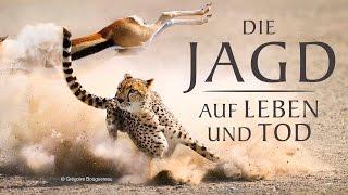 Die Jagd - Auf Leben und Tod - Trailer [HD] Deutsch / German