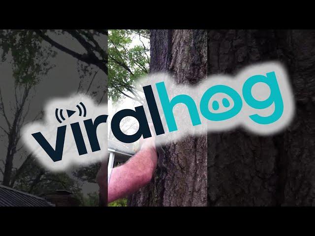Releasing a Squirrel Goes Very Wrong    ViralHog