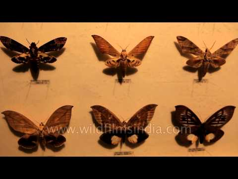 Butterfly displays at the Butterfly Park and Insect Kingdom museum in Sentosa