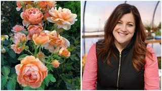 13 Rose Varieties 🌿🌹// Garden Answer