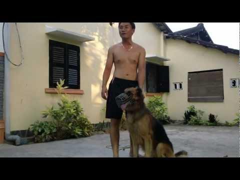 Trung tâm huấn luyện chó nghiệp vụ Vĩnh Long 1