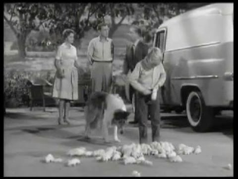 Lassie - Episode #265 -