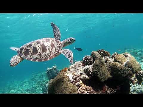Derawan Island,Indonesia