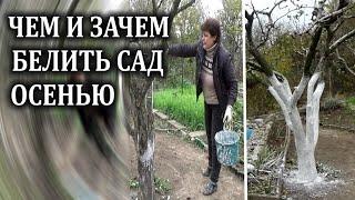 Чем белить деревья осенью  Зачем белить деревья