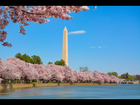 2019 National Cherry Blossom Festival