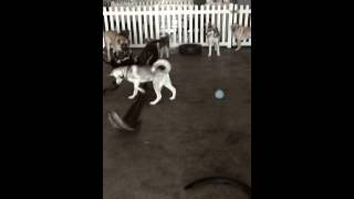 Naughty Dog School's Dog Daycare