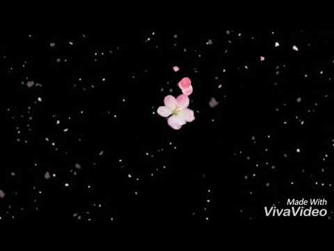Diantara Beribu Bintang ( Diantara Bintang ) - Hallo Band Lirik  Status Wa
