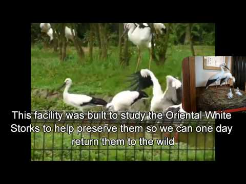 Japan Trip: Nature at the Eco Museum Center for Oriental White Stork, Hyogo Prefecture, Japan