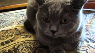 У кота тоже есть эмоции