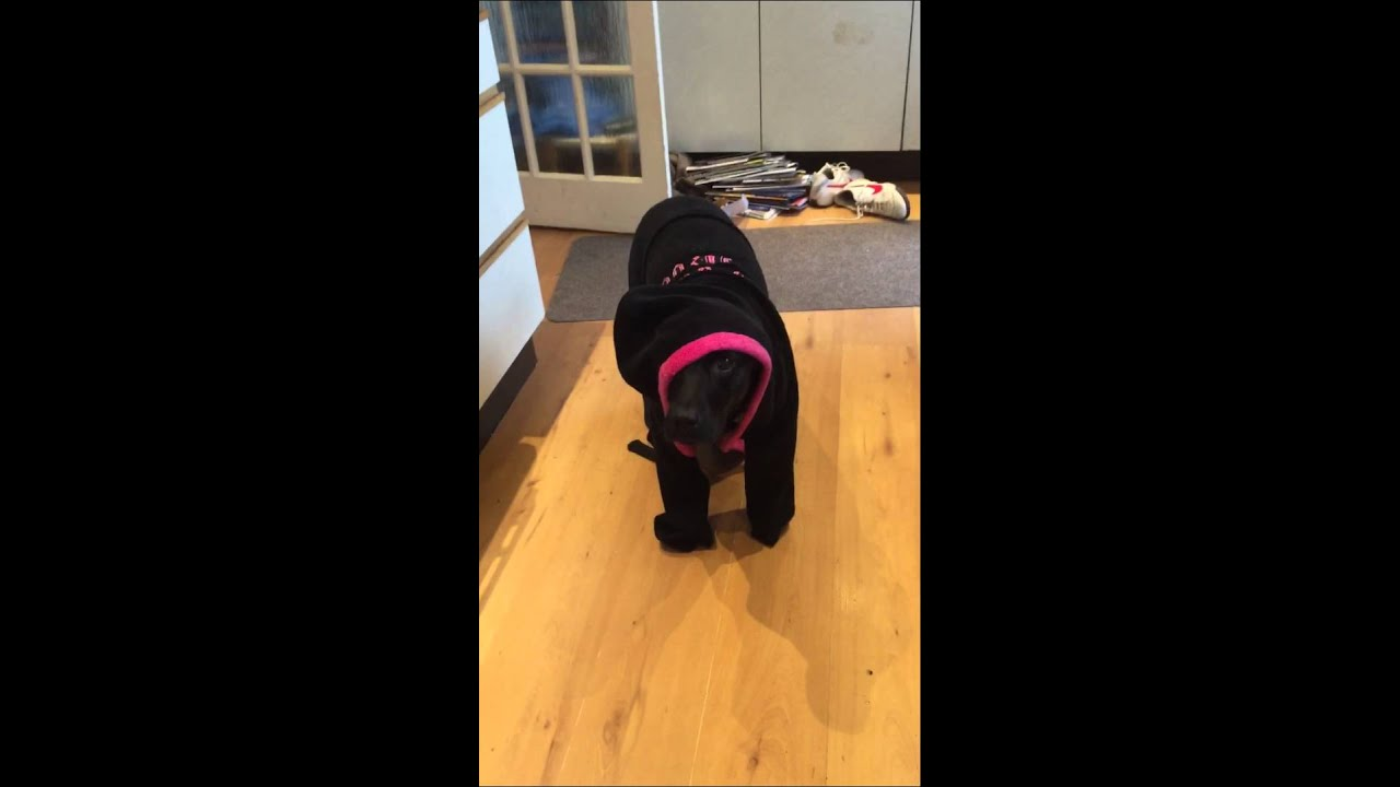 Dog in dressing gown - YouTube